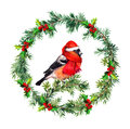 Christmas wreath - fir, mistletoe and bullfinch bird in santa hat. Watercolor