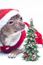 Christmas Xmas dog Royalty Free Stock Photography