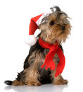 Christmas yorkie Stock Photo