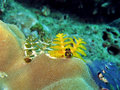 Christmass Tree Worm Royalty Free Stock Photo