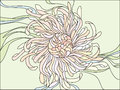 Chrysanthemum flower with delicate petals Stock Images