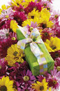 Chrysanthemum flowers chrysanthemum indicum and gift parcel Royalty Free Stock Image