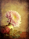 Chrysanthemum in jug with leaf texture added to the image and vignette round the edges Royalty Free Stock Photography