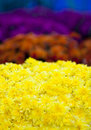 Chrysanthemums Royalty Free Stock Photos