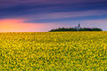 Church and field of rapeseed at sunrise transylvania romania summer landscape with a canola sunset europe Royalty Free Stock Photos