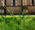 Churchyard grass blades of close up in Royalty Free Stock Photography