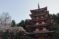 Chureito pagoda japan churieto with cherry blossom Royalty Free Stock Photo