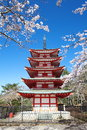Chureito pagoda in sakura season from yamanashi japan Royalty Free Stock Image