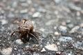 Cicada Exoskeleton Shell