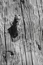 Cicada on wood Royalty Free Stock Photo