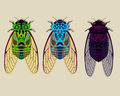 Cicadas collection part 1 Royalty Free Stock Photo