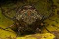 Cicadas Royalty Free Stock Photo