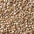 Cicerchia legume Stock Photography