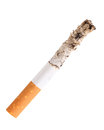 Cigarette butt with ash Royalty Free Stock Photo