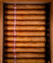 Cigars in humidor Royalty Free Stock Image