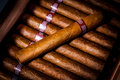Cigars in humidor Royalty Free Stock Photo