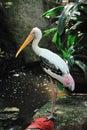 Cigogne peinte Images stock