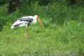 Cigogne peinte Photographie stock libre de droits