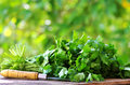 Cilantro herbs and knife on table Royalty Free Stock Image