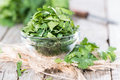 Cilantro leaves portion of fresh green on wooden background Stock Images