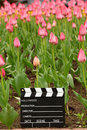 Cinema clapper board on field of tulips Royalty Free Stock Photography