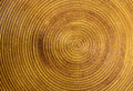 Circle gold steel background Royalty Free Stock Photo