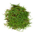 Circle grass Stock Image