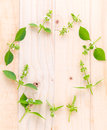 The circle of lemon basil hairy basil leaf and flower on woo wooden background Royalty Free Stock Photo