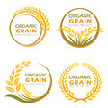 Circle paddy rice organic grain products and healthy food vector design