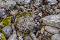 A circle of rocks covered with colored mosses. Royalty Free Stock Photo