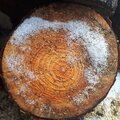 Circte cut wood pine texture with snow on winter season. Royalty Free Stock Photo