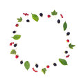 The circular composition of a  berries and leaves Royalty Free Stock Photo