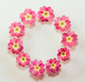 Circular floral frame of pink primrose flowers on white background with space for text