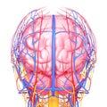 Y sistema de cabeza