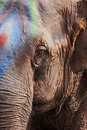 Circus elephant Royalty Free Stock Image