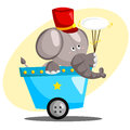 Circus elephant playing with a plate Royalty Free Stock Images