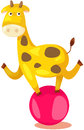 Circus giraffe running on ball Royalty Free Stock Photography
