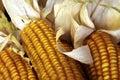 Ciérrese para arriba de mazorcas de maíz Imagenes de archivo