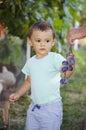 Ciruelo lindo de la cosecha del muchacho Fotos de archivo