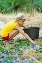 Ciruelos jovenes de la cosecha del muchacho Fotos de archivo