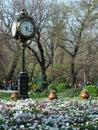 Cismigiu park in spring bucharest romania Stock Images