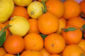 Citrics a lot of oranges and lemons Stock Photo
