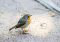 Citril finch. Small bird with a yellow breast