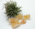 Citrine with air plant display of heat treated Stock Photos