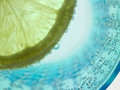 Citron Royalty Free Stock Photo