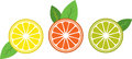 Citrus add a pinch of tanginess to life with these designs these would look great on your household kitchen fabric Stock Photos