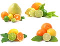 Citrus fruit collection isolated white background Stock Image