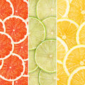 Citrus fruit green background with slices Royalty Free Stock Photo