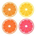 Citrus fruit slices. Four color variations. Isolated on white.