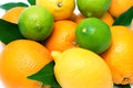 Citrus fruits isolated on white selective focus Royalty Free Stock Image